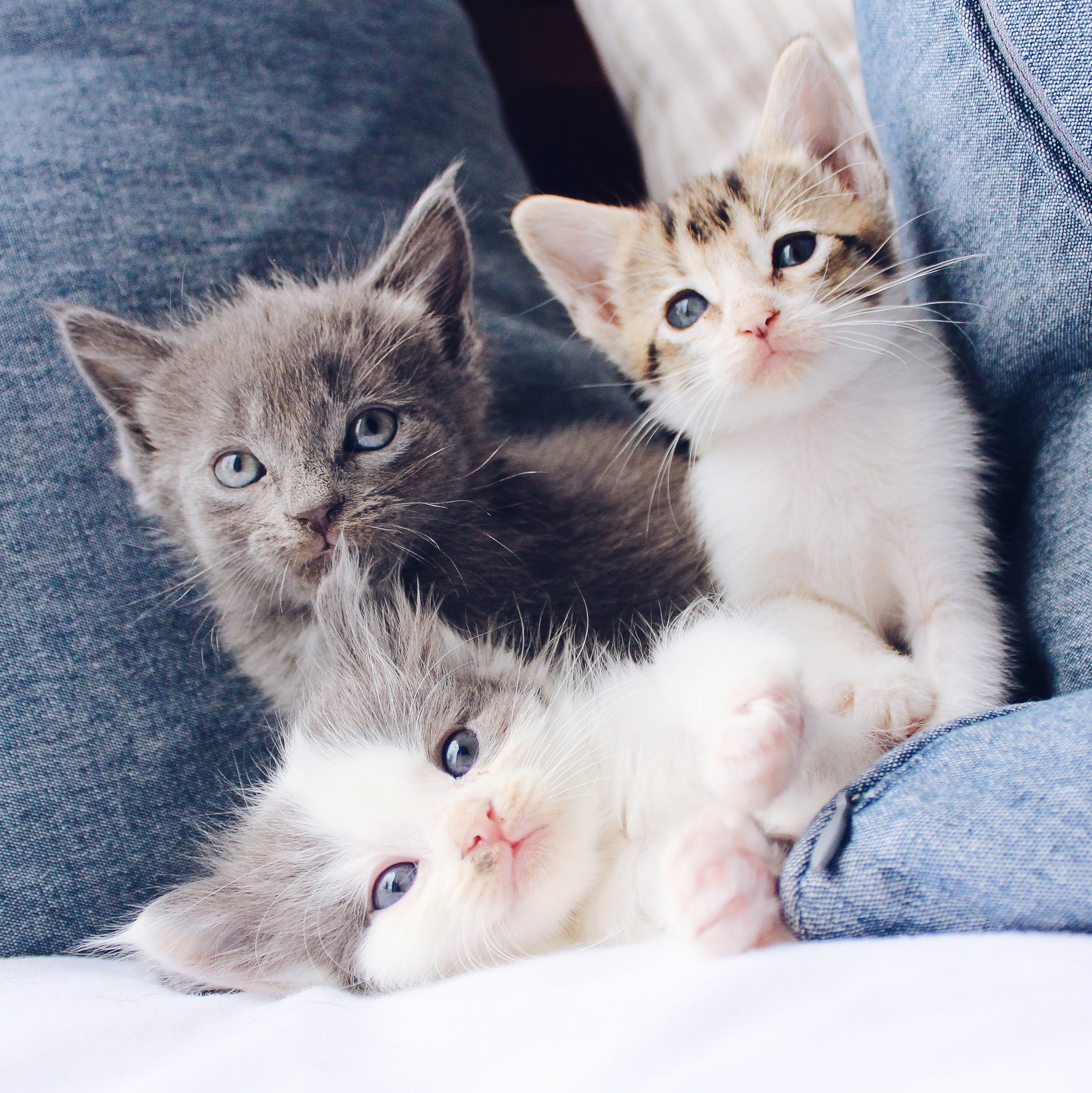Cute kittens on a couch to improve web content.